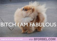 Bitch I am Fabulous