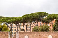 https://flic.kr/p/27pKsFz | Italian Stone Pine - Landscape, Rome Italy