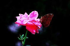 buttttterfliesss