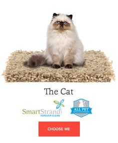 ALL PET protection Sweepstakes Carpet Brands, Animal Protection, Love Your Pet, Fall Decor, Entertaining, Pets, Animals, Animales, Animaux