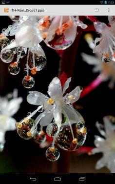 Drops on flowers