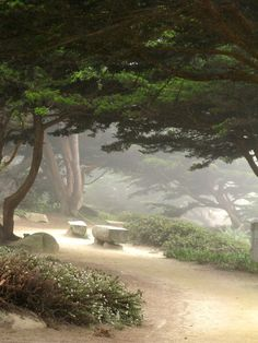 ~Carmel, California, pathways by the sea~