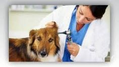 Animals Helpline : Veterinarian In Gulbarga