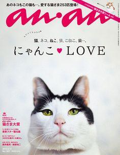 にゃんこLOVE - anan No. 1957 | アンアン (anan) マガジンワールド