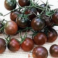 """Growing Tomatoes From Seed Organic Tomato Vegetable seeds Black Cherry from by Elenaseeds - Description : """"Ukraine organic seeds Organic Seeds, Grow Organic, Organic Fruit, Growing Tomatoes From Seed, Growing Tomatoes In Containers, Grow Tomatoes, Tomato Vegetable, Tomato Plants, Vegetable Gardening"""