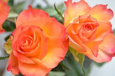 Become a beautiful rose. Let yourself bloom.