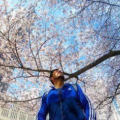 Aquí encontrarás los lugares que debes visitar antes de morir, descubre los lugares más secretos del mundo en esta guía y prepara tus maletas. Asia, Cherry Blossom, Japon Tokyo, Japan, Explore, World, Instagram, Travel, Amazing