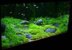 Underwater lawn