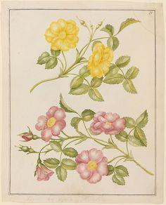 Geele en Roode Roosen (Gelbe und rote Rosen)