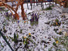 Wähnten sich Krokusse, Winterlinge und Co. bereits im Frühling, kamen Mitte März nochmals Schnee und Kälte zurück. Wie die Natur so spielt.
