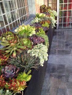 Succulent Landscapes, Gardens & Containers - contemporary - landscape - los angeles - Garden Of Eva Landscape Design Group
