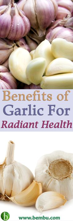 Garlic has also been referred to as the food that one avoids before meeting someone! Health Tips │ Health Ideas │Healthy Food │Health │Food │Vitamin │Healing │Natural Remedies │Nutrition │Natural Cure │Herbal Remedies │Natural beauty #Health #Ideas #Tips #Vitamin #Healthyfood #Food #Vitamin #Healing #Remedies #Nutrition #Cure #Herbalremedies #Naturalbeauty