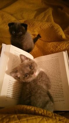 Everyone knows you need a kitten to read a book, it just makes it so much better!