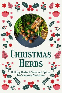These holiday herbs and seasonal spices are perfect to ring in the Christmas season with! Here is a big list of Christmas herbs, including ideas for how best to enjoy them this holiday season… More Natural Christmas, Christmas Crafts, Christmas Decorations, Organic Gardening Tips, Herbs Indoors, Growing Herbs, Homemade Crafts, Herbalism, Spices