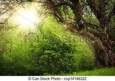 Stock Photo - Fairy tale glade - stock image, images, royalty free photo, stock photos, stock photograph, stock photographs, picture, pictures, graphic, graphics
