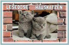 Mrs. Sandy 2: Lesedose - Hauskatzen