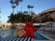 It is so relaxing! Teddy loves The Beverly Hills Hotel swimming pool