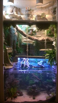 Combination of Bearded dragons terrarium top. Underneath a Chinese water dragons terrarium and aquarium with a variety of tropical fish.
