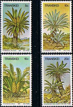 Transkei 1980 Cycads Set Fine Mint                    SG 71 4 Scott 75 8 Other African and British Commonwealth Stamps HERE!