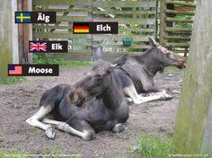 Alles über Elche