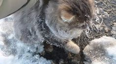 couple finds a cat frozen to the ground and help him - more at http://www.thelolempire.com