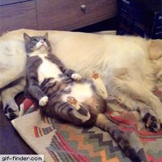 Cat is trying to relax | Gif Finder – Find and Share funny animated gifs