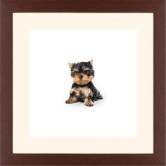 Terrier Puppy Framed Print, Brown, Contemporary, White, Cream, Single piece, 12 x 12 inches