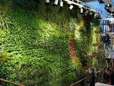 Living wall in anthropologie shop on Regent street
