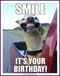 Pin Kristi Lehman On Happy Birthday Funny Happy with regard to Birthday Meme For Him - Best Birthday Party Ideas Happy Birthday For Him, Funny Happy Birthday Pictures, Funny Happy Birthday Wishes, Birthday Wishes Quotes, Birthday Messages, Card Birthday, Funny Happy Birthdays, Funny Pictures, Happy Birthday Animals Funny