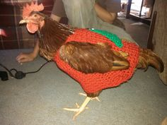 Chicken sweater hen sweater chickens hens by bagsandmorebypam, $17.00  WTF!?  THIS IS REAL!