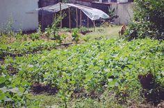 La huerta orgánica de Zapote
