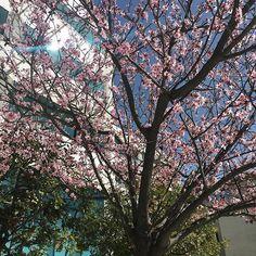 Άνοιξη είναι: ήλιος και ανθισμένες αμυγδαλιές 🌺☀️ #springbreak #spring #joy #joytvgr