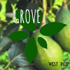 "The Grove of #Avocado Dreams ""hass"" arrived -  the all-new West Pak Avocado website has arrived! http://www.westpakavocado.com https://video.buffer.com/v/5654b435789f3aec3d0a3325"