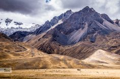 Farming the Altiplano