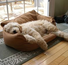 Goldendoodles make the worst type of pets. Animals And Pets, Baby Animals, Funny Animals, Cute Animals, Cute Puppies, Cute Dogs, Dogs And Puppies, Doggies, Petit Basset Griffon Vendeen