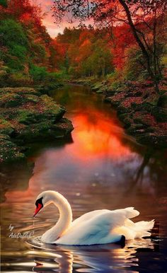 That time is beautiful scenery. We will present an article about sunset quotes love. Beautiful Swan, Beautiful Birds, Beautiful World, Beautiful Images, Animals Beautiful, Background Pictures, Nature Scenes, Nature Wallpaper, Nature Pictures