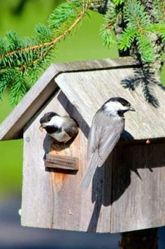 Attracting Nesting Birds with Better Birdhouses - Birds and Blooms