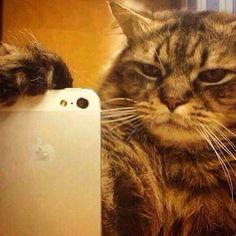 Kitty selfie