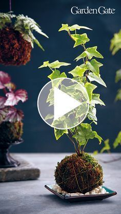 How to Make a Kokedama: This Japanese form of garden art is a unique and beautiful way to display plants. Make your own kokedama with our simple how-to steps! Herb Garden Design, Vegetable Garden Design, Garden Art, Garden Edging, House Plants Decor, Plant Decor, Hanging Plants, Indoor Plants, Diy Jardin