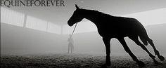 (10) horse gif   Tumblr
