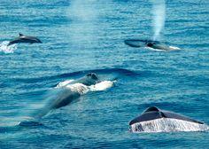 Viaje al fondo de la Naturaleza. Tour pensado para quienes quieran entrar en contacto directo con la fauna y la flora de Sri Lanka, uno de los lugares con mayor biodiversidad de todo el mundo. Atravesando sus diversos ecosistemas podrás encontrarte cara a cara con leopardos, tortugas, elefantes, helechos, orquídeas y, dependiendo de la temporada, hasta con ballenas azules y delfines. Compartirás tus vivencias en un ambiente único.