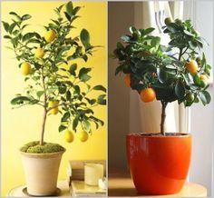 Design Megillah: Indoor Potted Trees