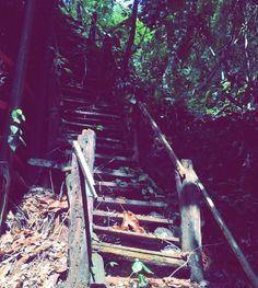A natureza não precisa de comentários #natureza #linda #trilha