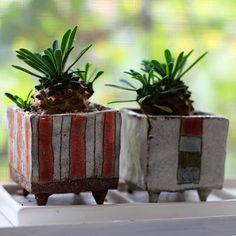 Mini Cube Pots Planted Euphorbia
