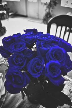 Shared by Anna Veneziani. Find images and videos about blue, flowers and rose on We Heart It - the app to get lost in what you love. Blue Roses Wallpaper, Flower Wallpaper, Iphone Wallpaper, Blue Flowers, Pink Roses, Box Roses, Exotic Flowers, Yellow Roses, Color Splash