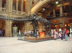 Natural History Museum Visiting London For The First Time? - Top 10 Places To Visit in London London Museums, London Places, Cool Places To Visit, Places To Travel, Top Attractions In London, Natural History Museum London, National History, Things To Do In London, Voyage