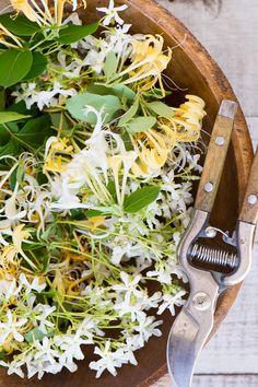 Edible blossoms for Honeysuckle Vodka Lemonade