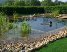 Its construction method recreates natural ecosystems. Swimming Pool Pond, Natural Swimming Ponds, Natural Pond, Pond Design, Landscape Design, Pond Waterfall, Water Pond, Water Features In The Garden, Cool Pools