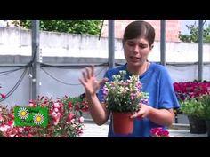 Cómo mejorar las plantas con café | facilisimo.com - YouTube