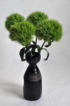 Awesome new Dianthus- looks like balls of moss!   (Dianthus barbatus 'Green Trick')